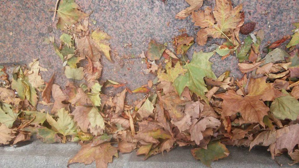 Les feuilles mortes traduzione canzone e testo francese di yves-montand