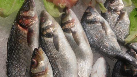 Ricette pesca mare