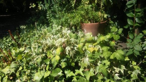 Poesia verde giardino