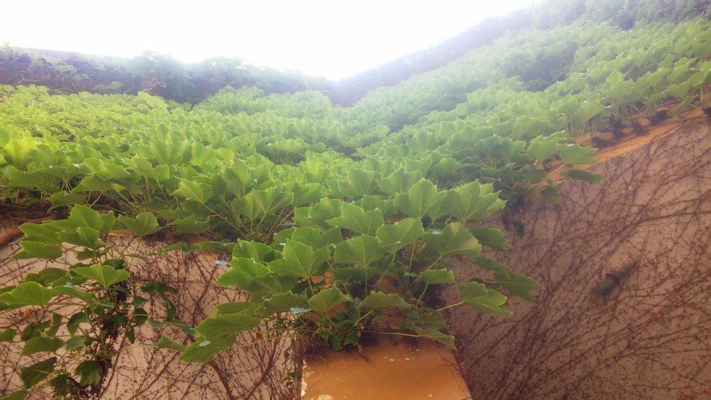 Cielo luminoso su piante rampicanti (immagine di copertina della poesia)