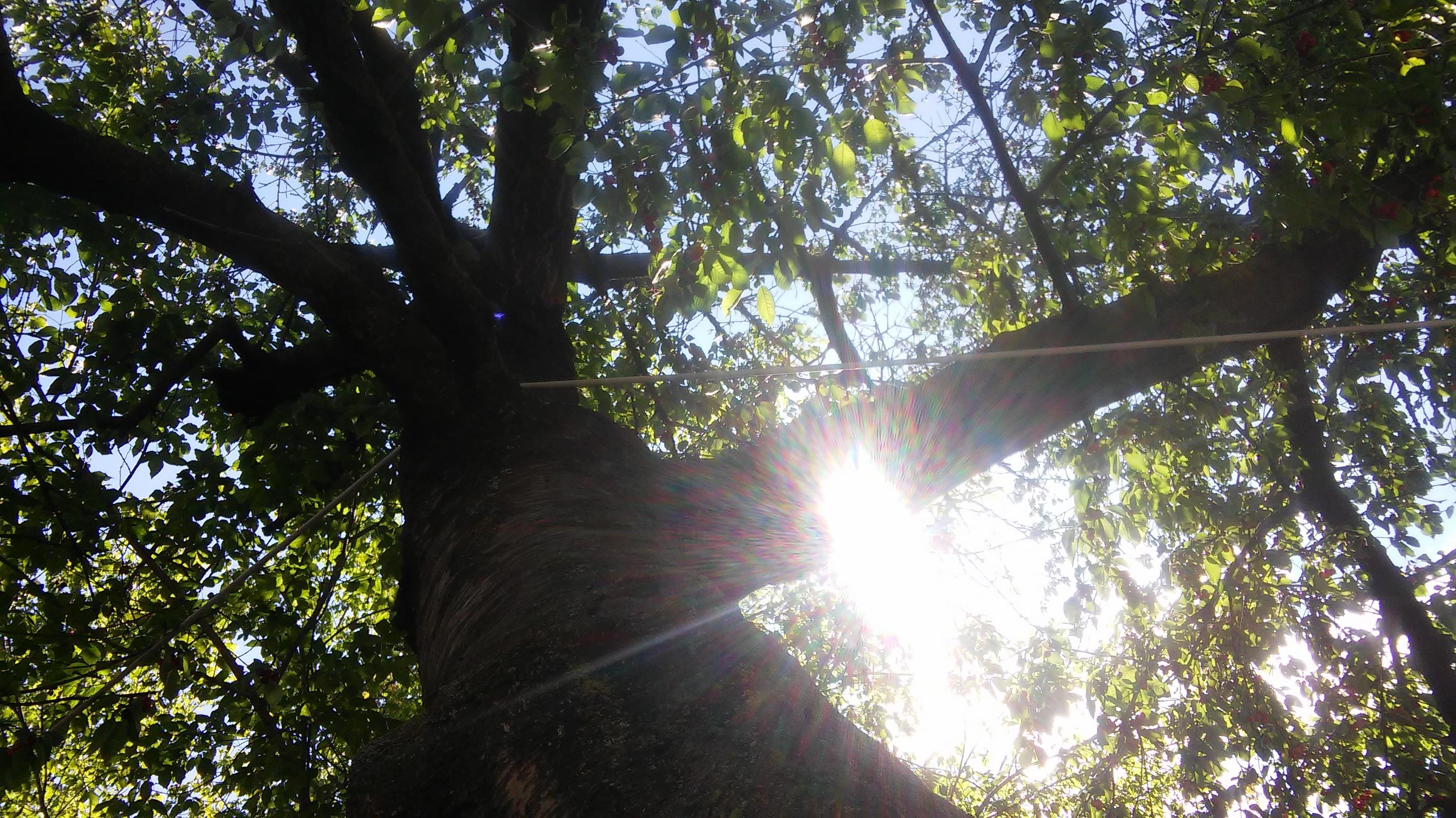 festa degli alberi poesia