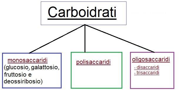 Mappa concettuale carboidrati saccaridi
