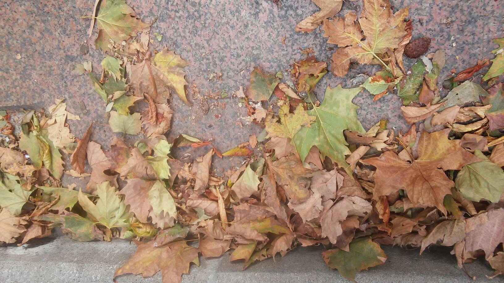 Foglie morte canzone Les feuilles mortes