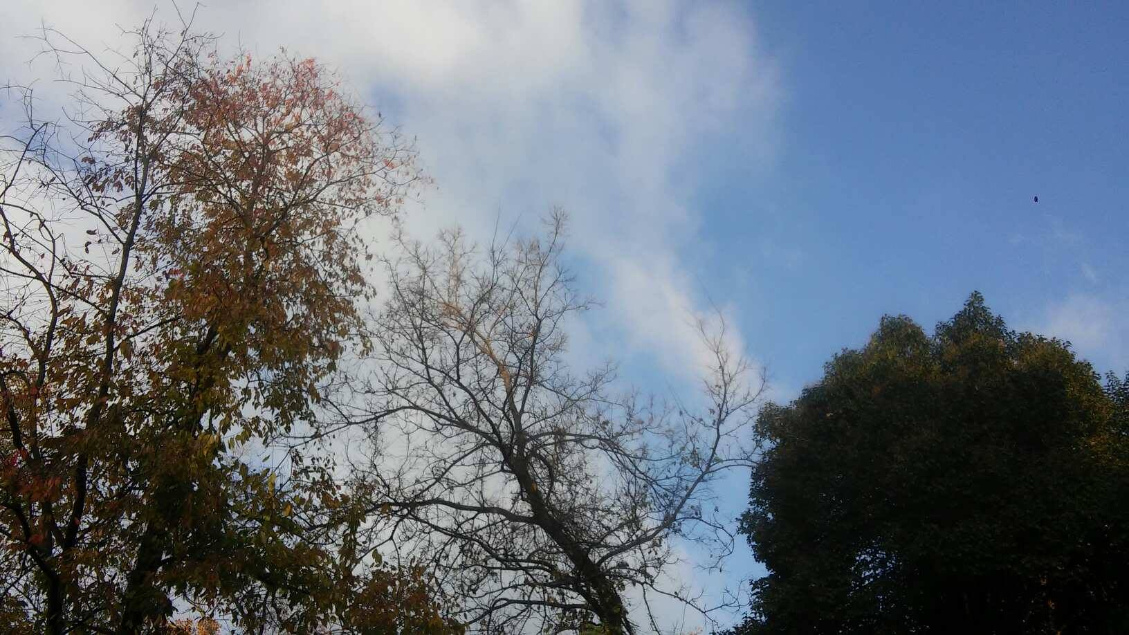 Cielo e alberi
