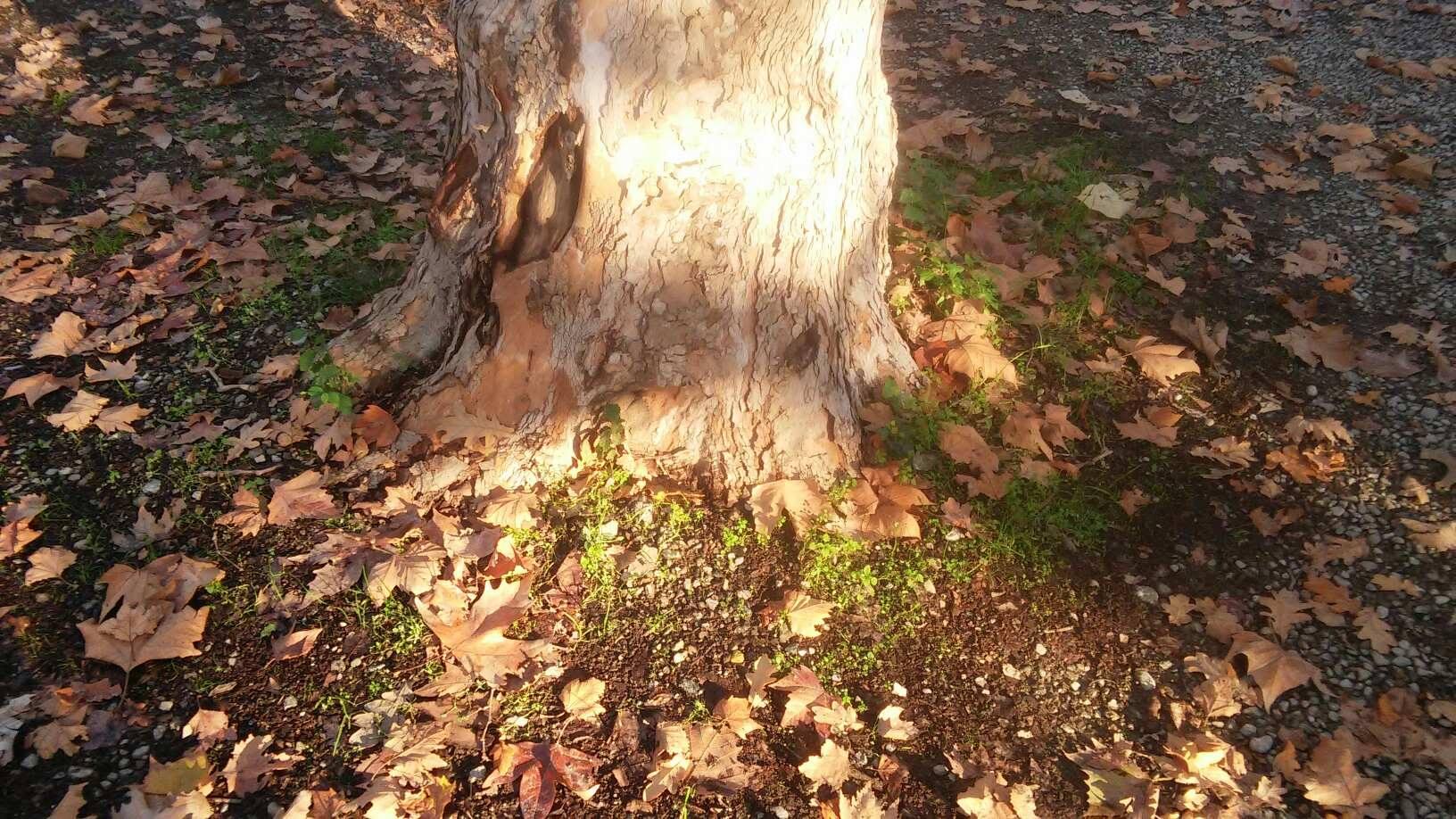 foglie secche a novembre