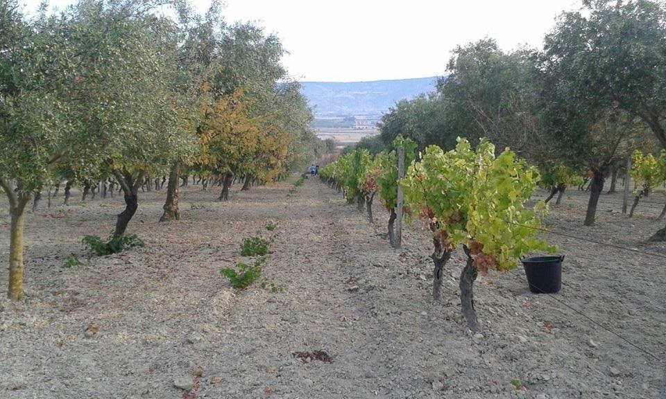 Wine Sardinia