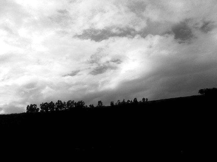 Il vento muove gli alberi