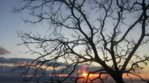 Albero al tramonto a Cagliari