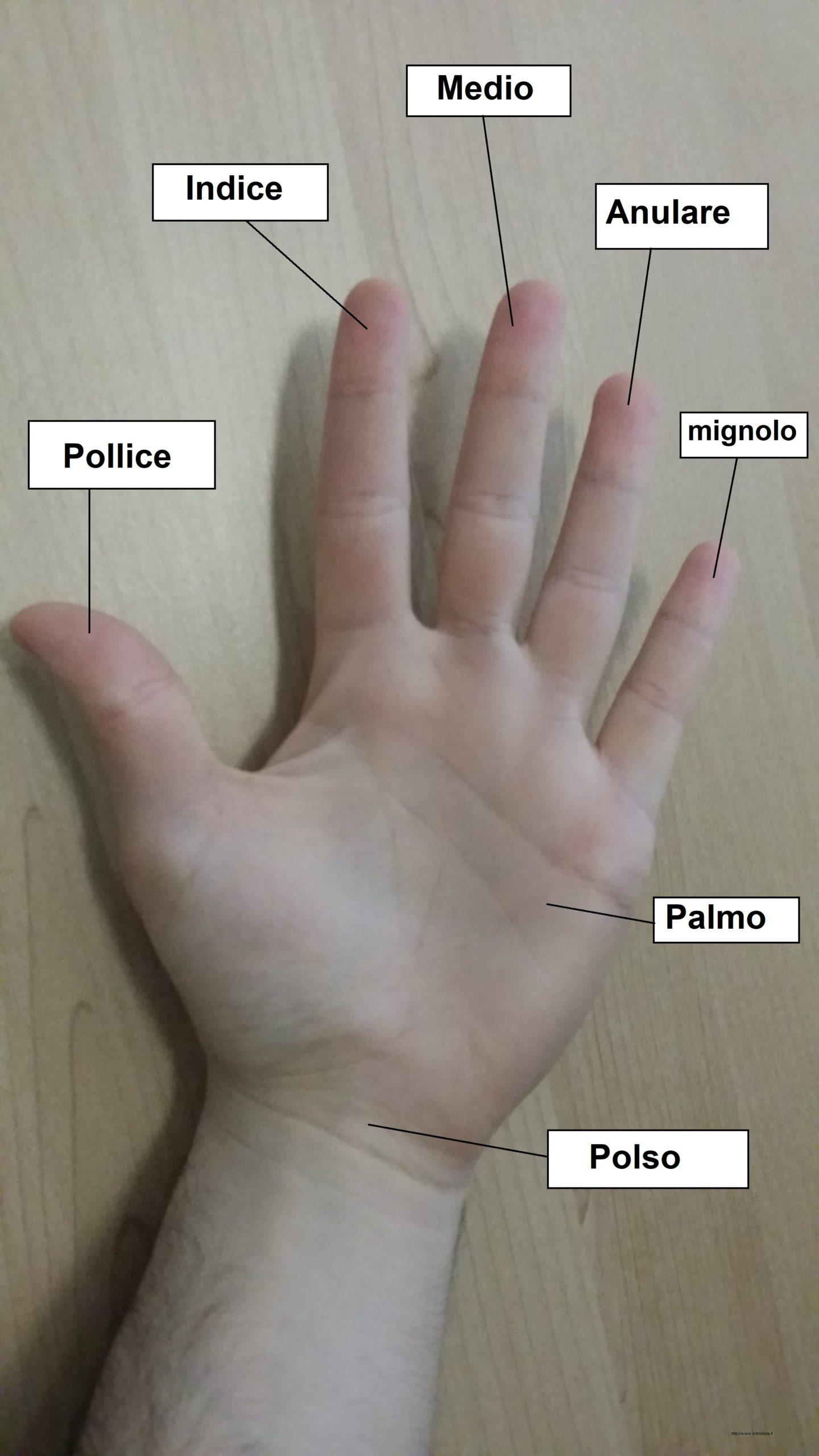 Parti della mano scaled